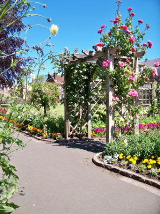 Roses at Bath Gardens